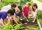 County Director It is now time that all of that planning for the 2020 gardening season will pay off . If you are not growing your